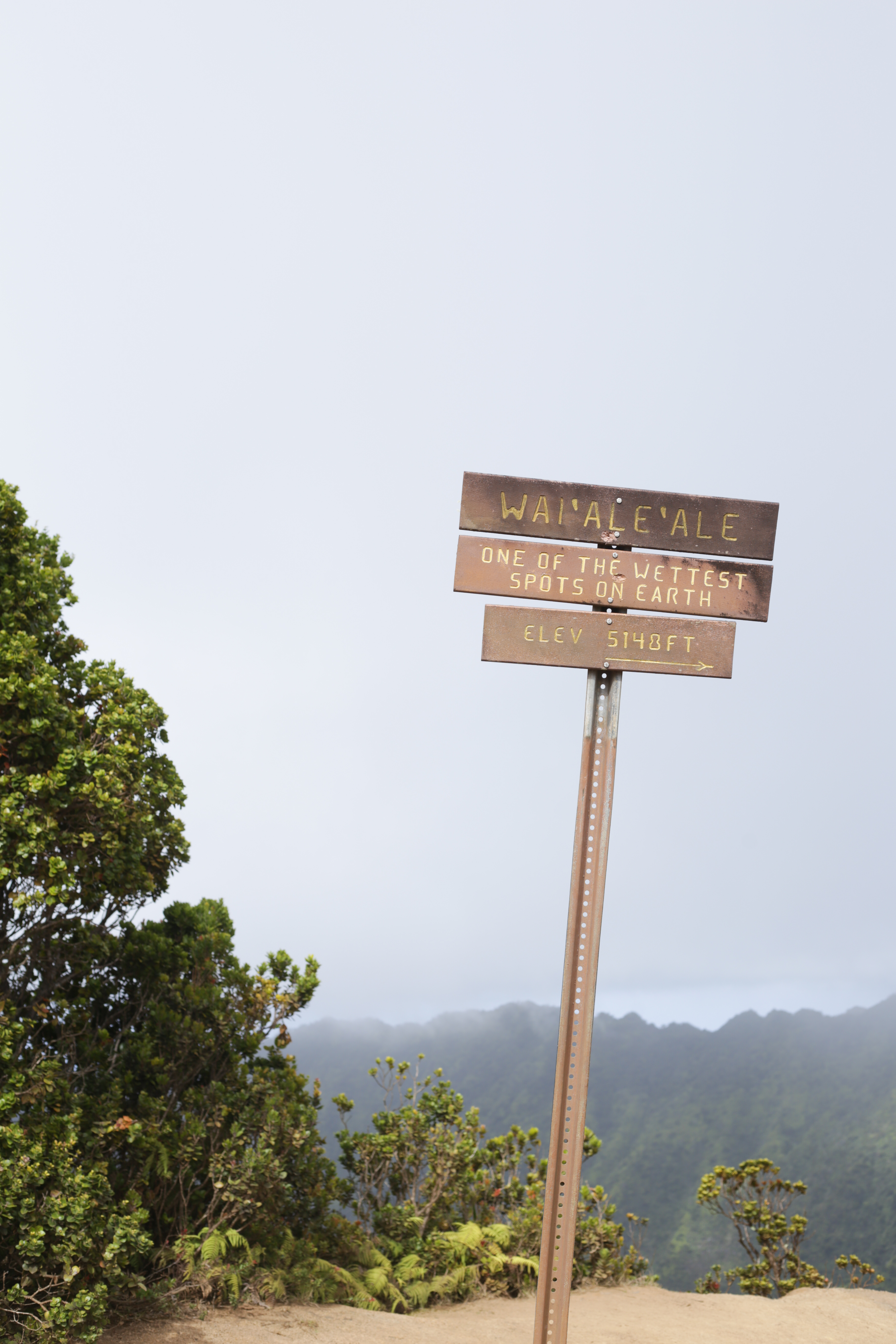 Pihea Trail, Waimea Canyon Kauai