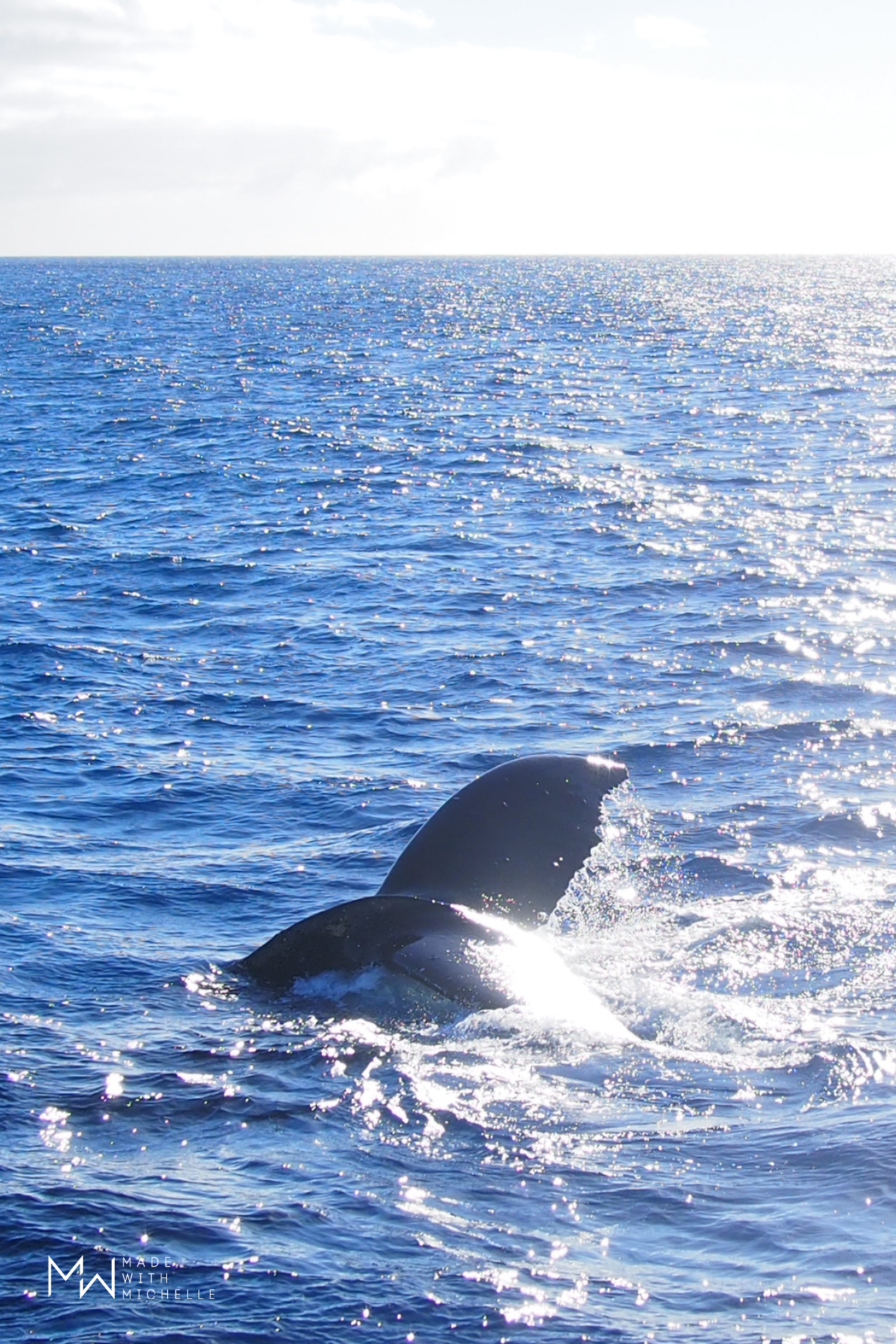 Things to do in Maui: Whale watching