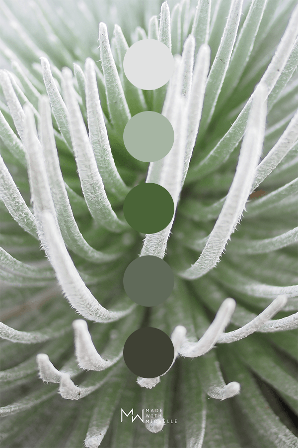 silversword color palette