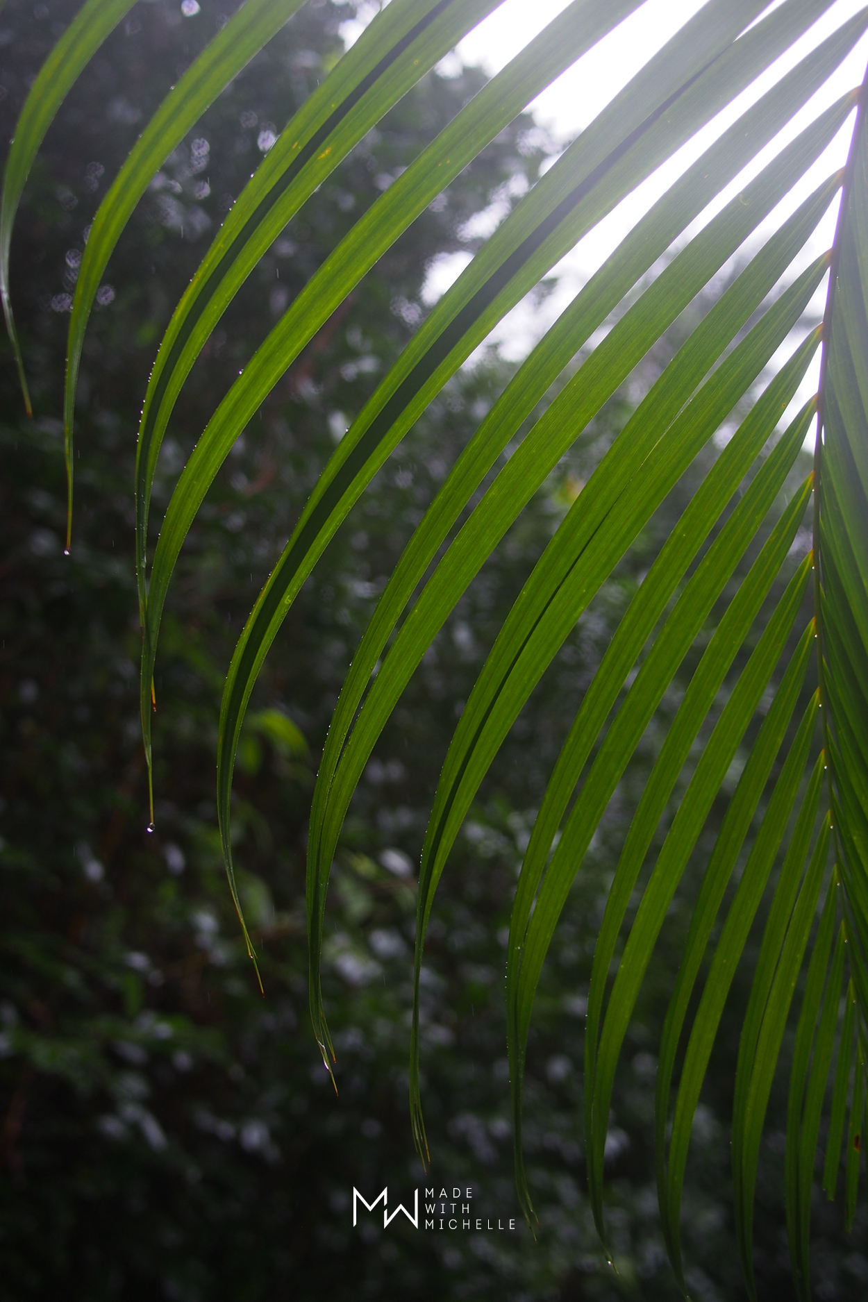 Garden of Eden Arboretum Maui